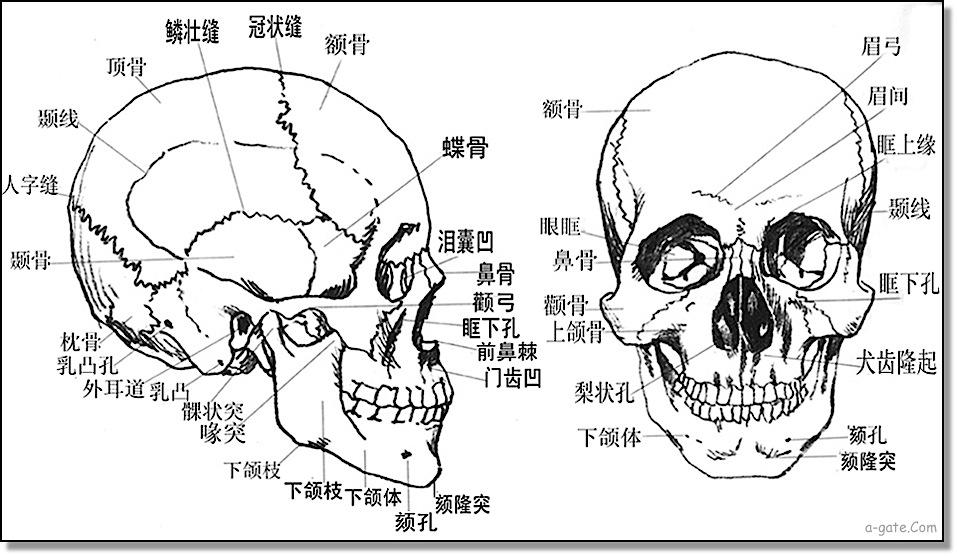 頭面骨骼相法之意義